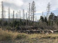 Weiterlesen: Werden und Vergehen im Wald