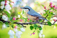 Weiterlesen: Trotz Corona - Der Frühling hält Einzug