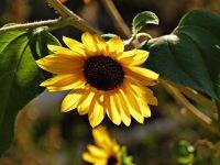 Weiterlesen: Herbstgedichte