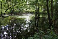 Weiterlesen: Exkursionsreihe: mit den Umweltverbänden in den Gipskarst