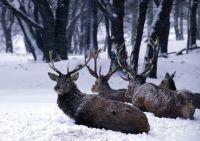 Weiterlesen: Den Tieren im Winter die schwere Zeit erleichtern