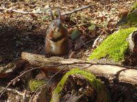 Weiterlesen: Das Eichhörnchen als Hilfe für den Waldwandel im Nationalpark