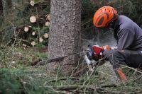 Weiterlesen: Forstarbeiten wegen Borkenkäferbefall
