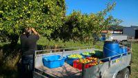 Weiterlesen: Apfelsaft für St. Petri