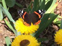 Weiterlesen: Schmetterlinge in Osterhagen
