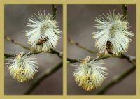 Weiterlesen: Fleißige Bienen