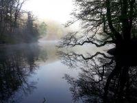 Weiterlesen: Frühlings-Nebel
