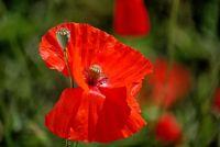 Weiterlesen: Fotopirsch im Garten