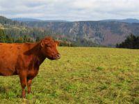 Weiterlesen: Herbst im Harz: Tierisch gut