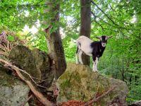 Weiterlesen: Begegnung im Wald