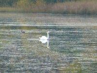 Weiterlesen: Schwanensee