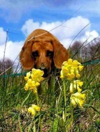 Weiterlesen: Annie entdeckt den Frühling