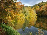 Weiterlesen: Goldener Oktober am Wiesenbeker Teich