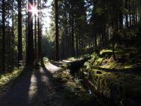 Weiterlesen: Morgenstimmung am Dammgraben