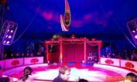 Weiterlesen: Circus Laluna