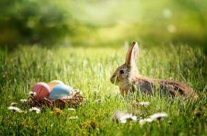Je nach Region, war früher nicht der Hase, sondern Storch, Fuchs oder Kuckuck für das Verstecken der Eier zuständig
