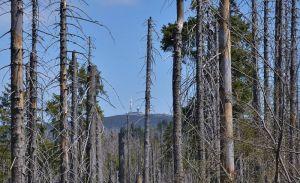 Der Harz ist wie geschaffen als Kulisse für Krimis.