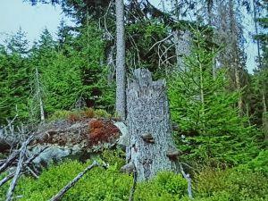 Eigentlich sei Totholz doch ganz schön, fragte Thomas Beck die Zuhörer. Foto: Nationalpark Harz