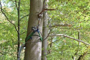 Baumschoner sorgen dafür, dass die Bäume keinen Schaden nehmen