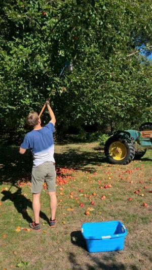 Die Apfel-Sammelaktion wurde zum ersten Mal durchgeführt - rund 300 kg Äpfel können nun gepresst werden