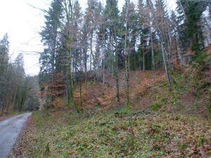 20a Dammrest des 1718-1720 angelegten Kupferroser Teiches.