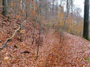 22a Parallel laufende Hanggräben am Trommelweg. Der obere Graben leitete Wasser aus der Krummen Lutter in den Kehrradgraben der Grube Kupferrose