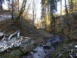 33a Dammrest des Krumme Lutter Teiches auch Luttersegener Teich genannt