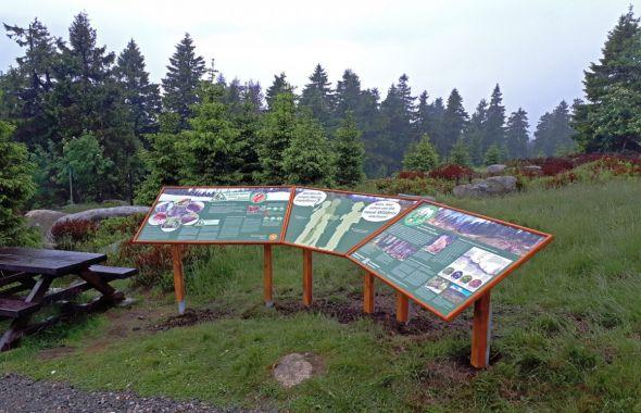 Themeninsel am Abzweig Goetheweg mit Informationen zum Brockenurwald und Mooren (Foto: Claudia Mothes)