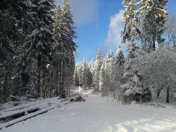 nter der schweren Last festgefrorenen Schnees brechen Kronen und Kronenteile. Fotos: Niedersächsische Landesforsten