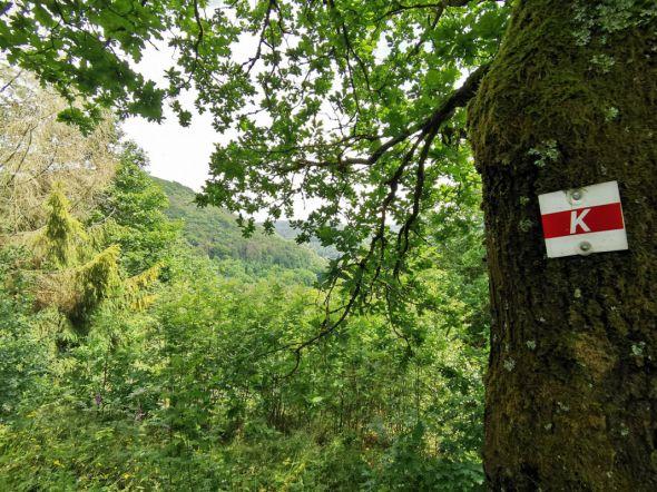 Beschilderung des Karstwanderweges im Weltwald Bad Grund (Foto: HTV)
