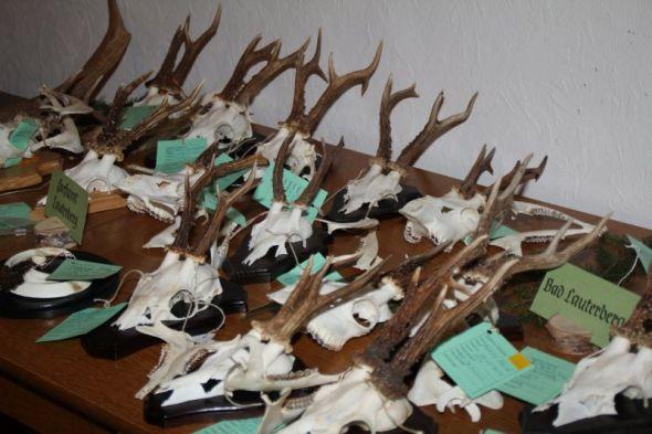 Die Jagdgenossenschaft entscheidet darüber, ob die Flächen überhaupt zur Jagd verpachtet werden sollen - und falls ja, wie und an wen